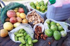 Fruits-de-Guadeloupe-2-
