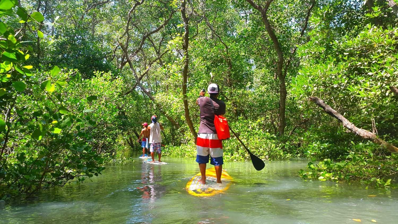 Paddle-Mangrove