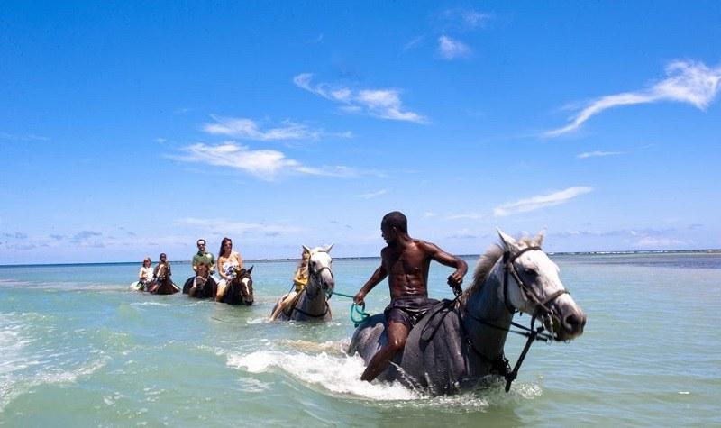 cheval-braco-stables-jamaique