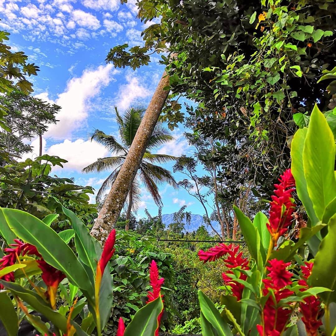 Jardin tropical au pied de la soufrière de Guadeloupe