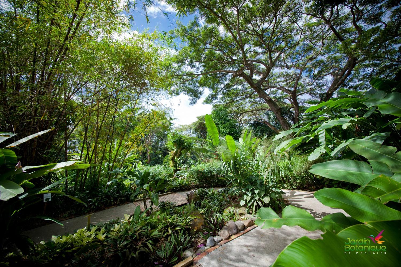 Sur le circuit du jardin Botanique de Deshaies en Guadeloupe